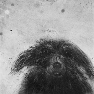 Scruffy Dog's Head - Chris Salmon