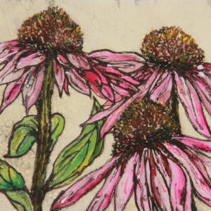 Late summer echinacea - Vicky Oldfield