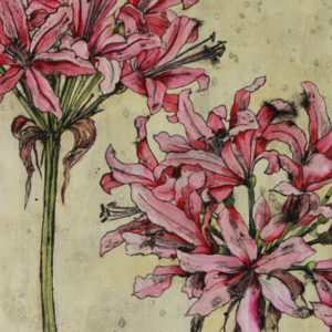 Nerines - Vicky Oldfield