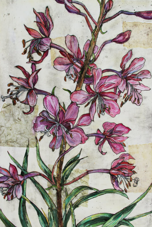 Rosebay willowherb - Vicky Oldfield