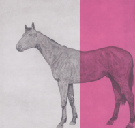 Horse Study Fuschia - Guy Allen