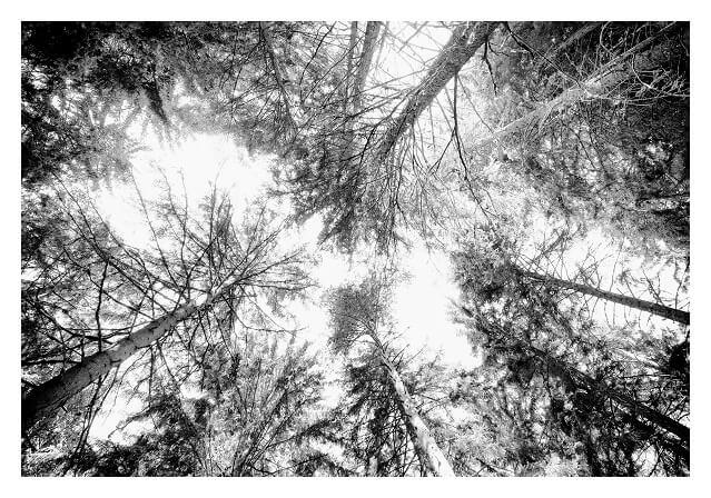 Alex Arnaoudov Treescape