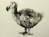 Rowland's Dodo (Version II) - Tammy Mackay