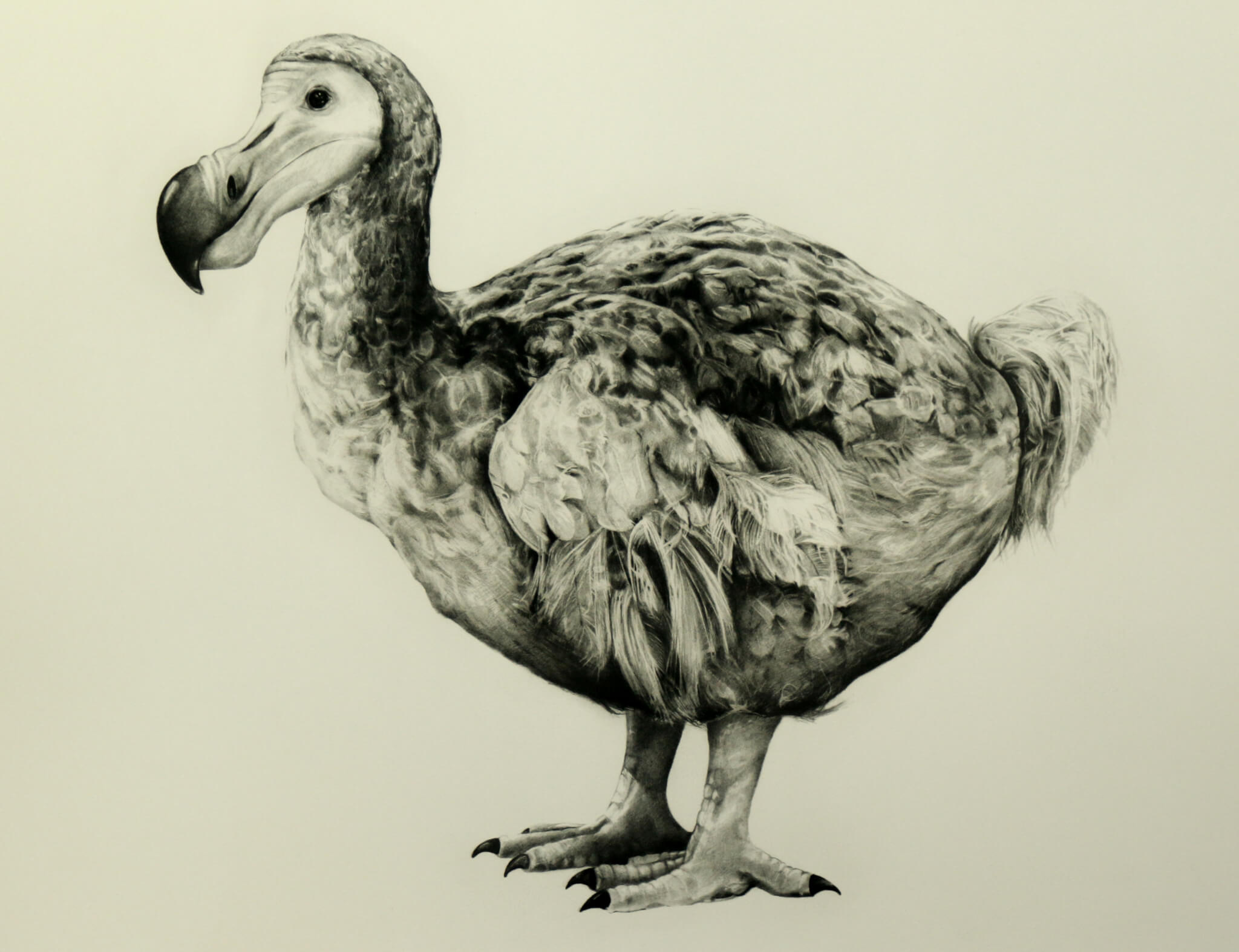 Rowland's Dodo (Version II) - Tammy Mackay