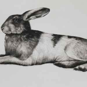 Untitled (Hare) - Tammy Mackay