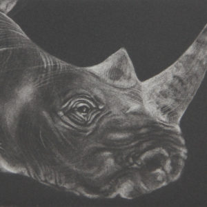 Untitled (Rhino) - Tammy Mackay