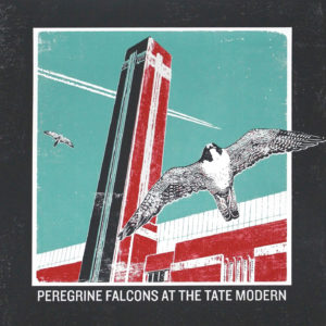 Peregrine Falcons At The Tate Modern - Emma Reynolds