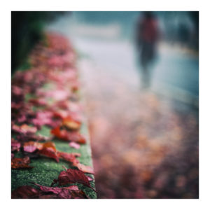 Autumn Walk - Alex Arnaoudov